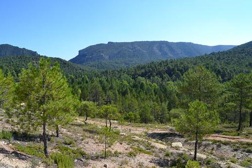 Parque natural del Alto Tajo - Vistas