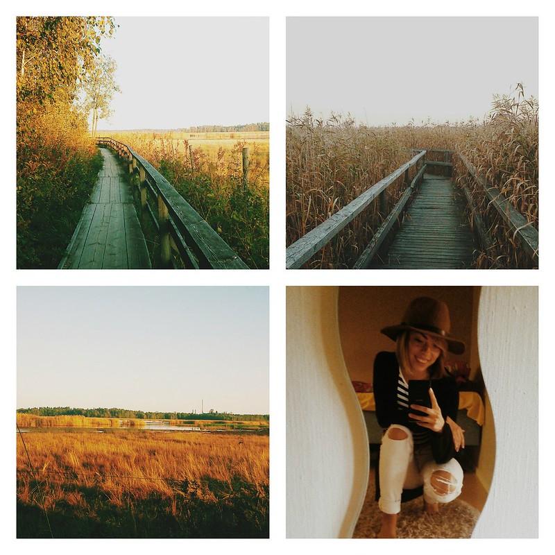 PicMonkey Collagehöst