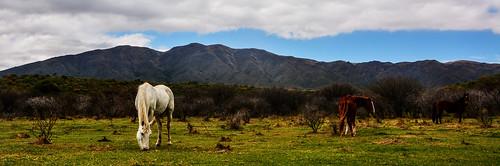 Autor: Juan Montiel
