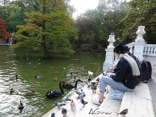 Patos, cisnes negros, pajaritos, palomas... y hasta un par de