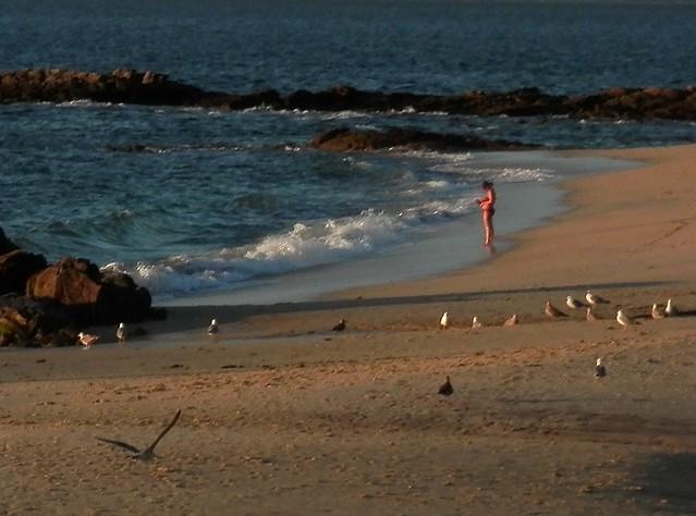 Las gaviotas retoman la playa 2