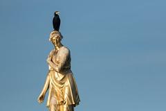 HolderCormorant on Diana Fountain, Bushy Park