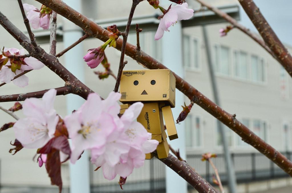 お花見ダンボー。 (5)