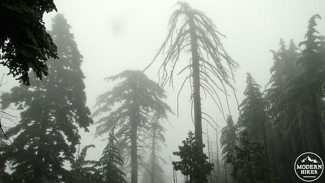 Sugar pines - 2014-04-25 at 11-57-29