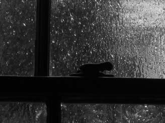 20040423_RAIN