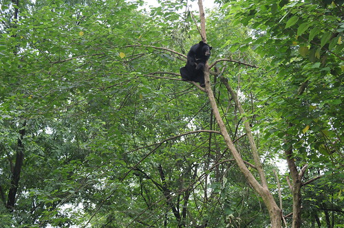 Wang Cai relaxes up a tree