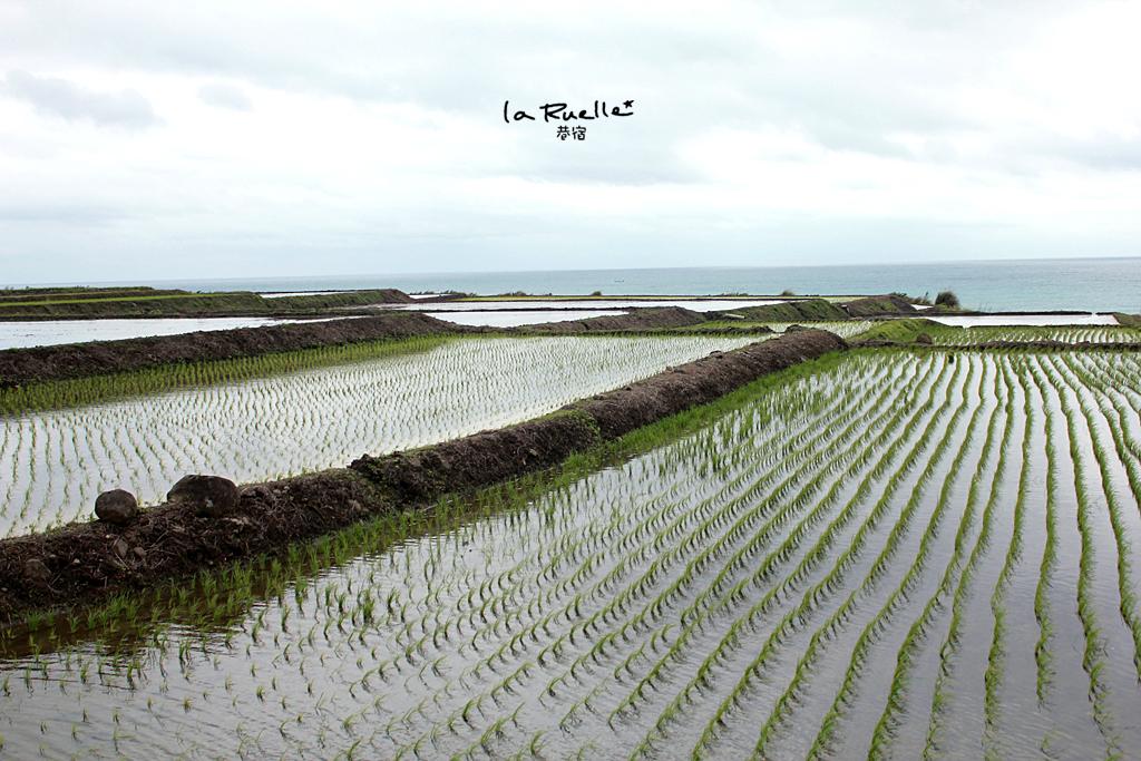 新社海岸梯田