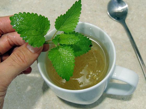 corn-silk-tea-15