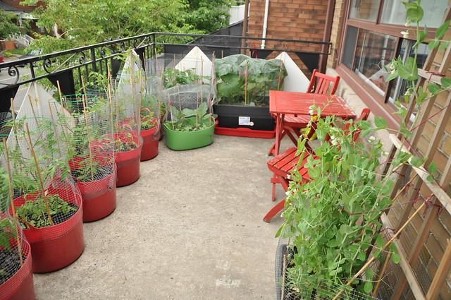 garden, June 25