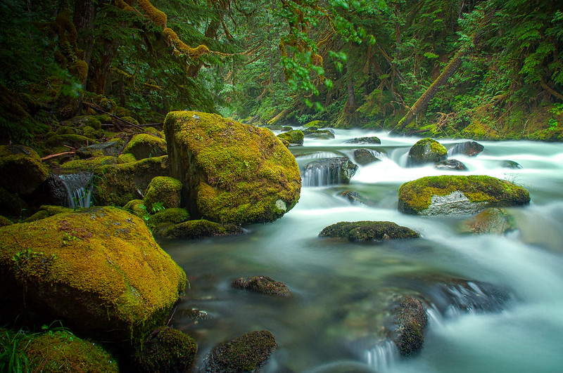 Lush, Newhalem Creek