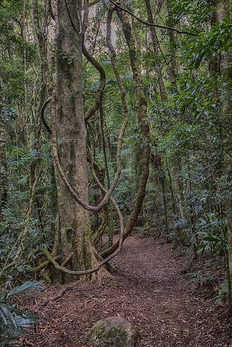 landscape nikon rainforest lamingtonnationalpark