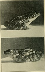 """Image from page 7 of """"The biology of the frog"""" (1907)"""