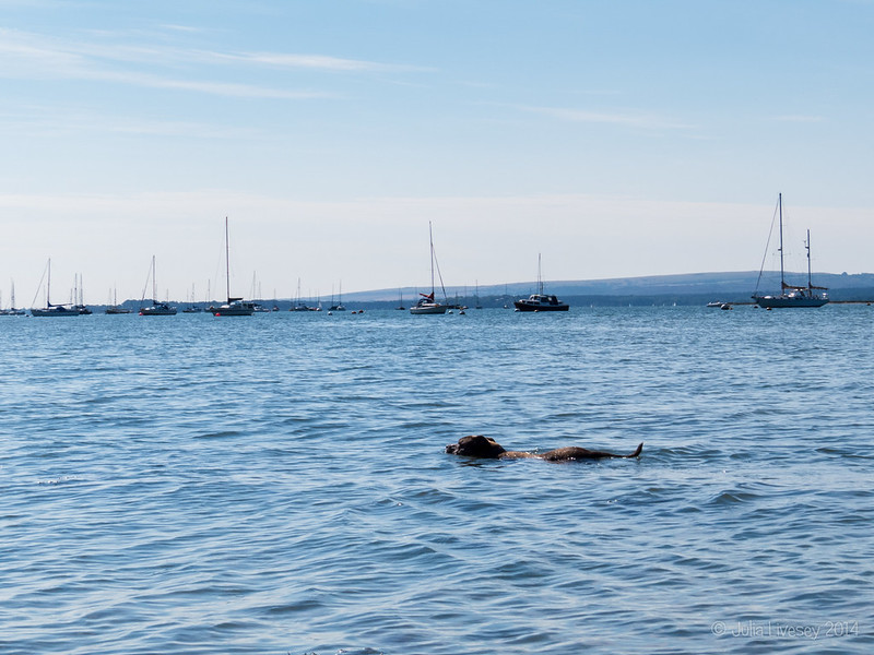 Is it the Loch Ness Monster?