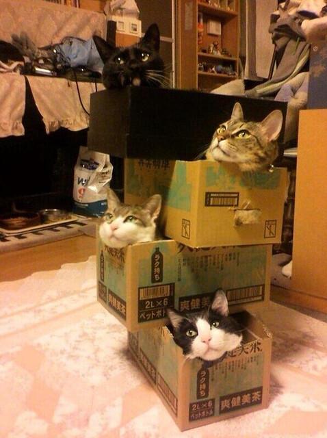 catstack.png