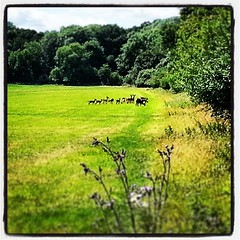 Small group of Fallow Deer at Copped Hall #EppingForest this morning.