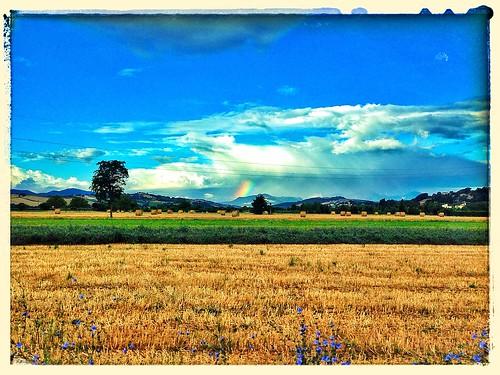 italy color verde spring italia colore estate campagna sanlorenzo fiori arcobaleno tempo colline bellezza arancione spettacolo papaveri bello sanlorenzoincampo