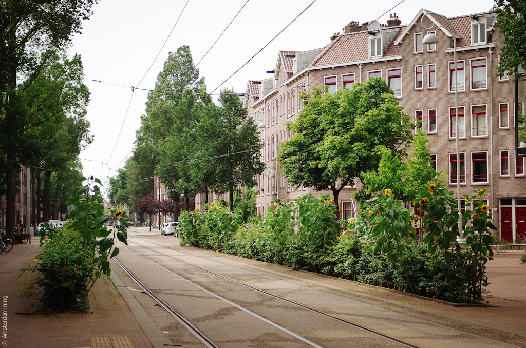 Amsterdam, Indische Buurt (Oost)