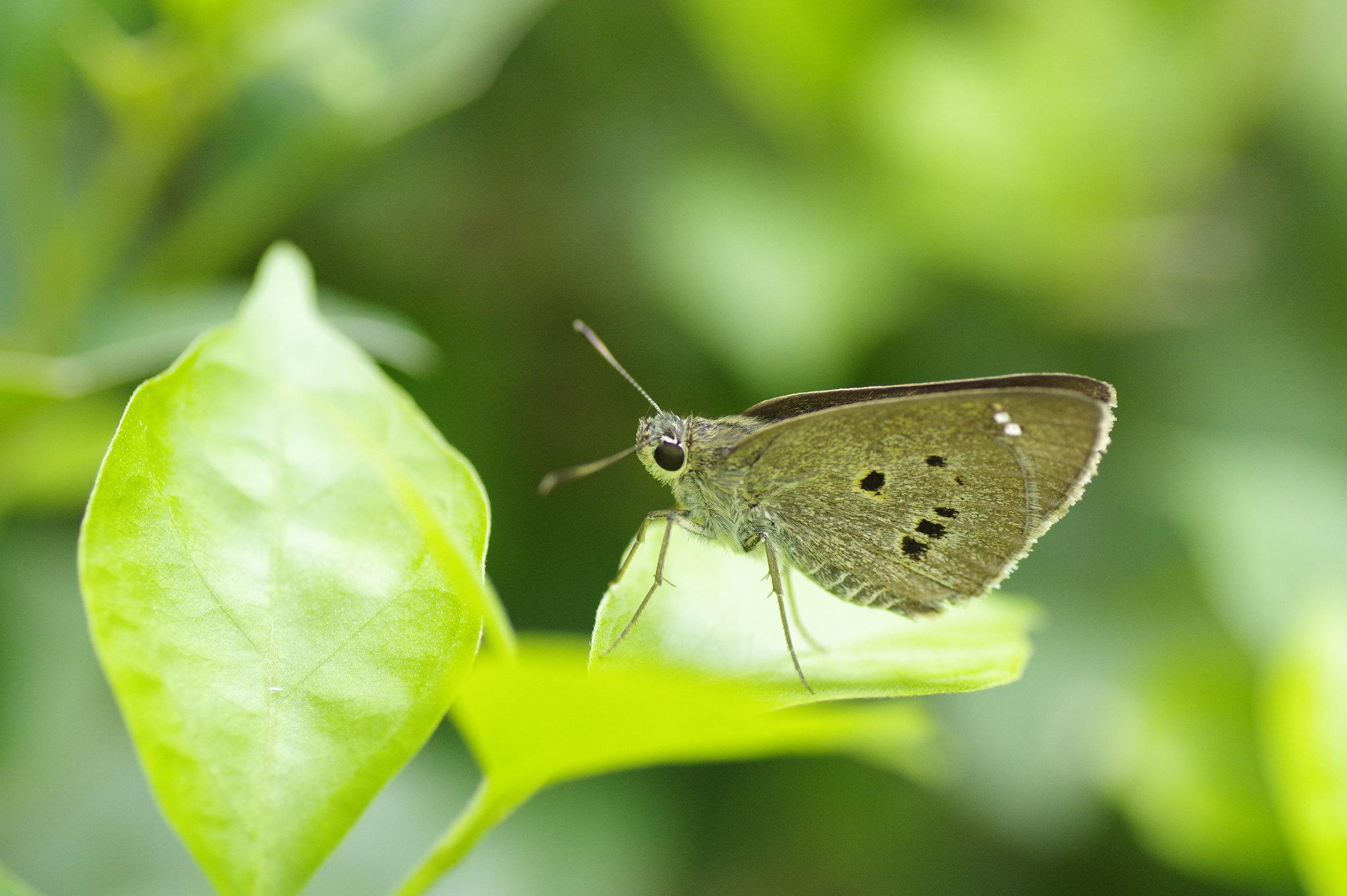 早上多忙也要打蝴蝶