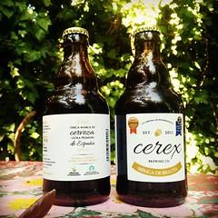 Cerveza de bellota (acorn beer)