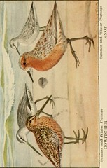 "Image from page 141 of ""The book of birds, common birds of town and country and American game birds"" (1918)"