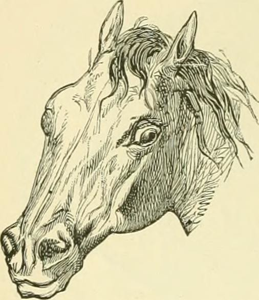"Image from page 141 of ""The standard horse book, comprising the taming, controlling and education of unbroken and vicious horses"" (1895)"