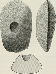 "Image from page 190 of ""The ancient stone implements, weapons, and ornaments, of Great Britain"" (1872)"