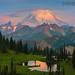 Mt Rainier Wildflower Season Starts by kevin mcneal