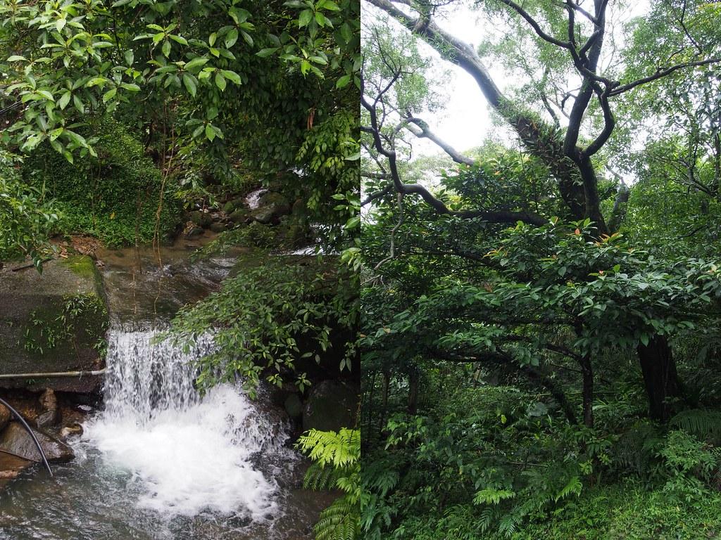 luontoa4