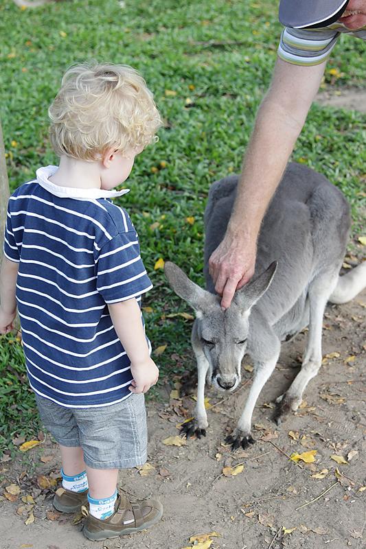 KoalaSanctuary21