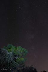 Pino con vocación de astronomo