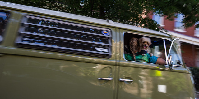 VW Bus, tie dye and happy dog