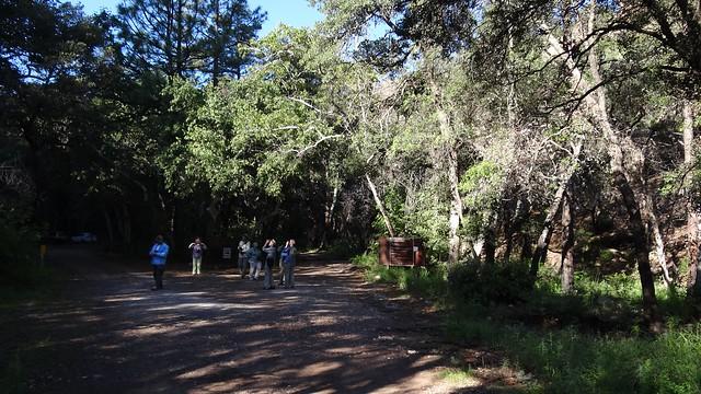 birders birding Chiricahuas
