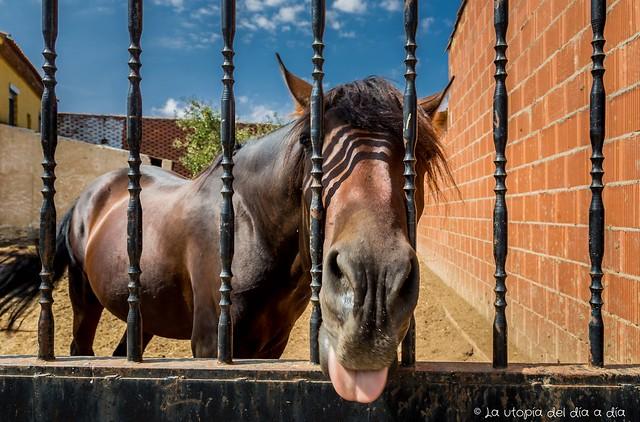 Los unicornios utópicos están en crisis