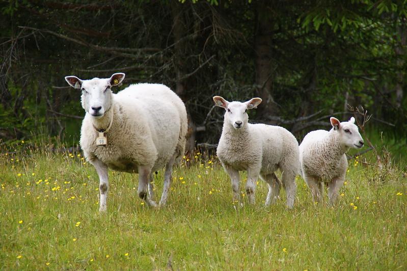 Jenstad-Åmotan