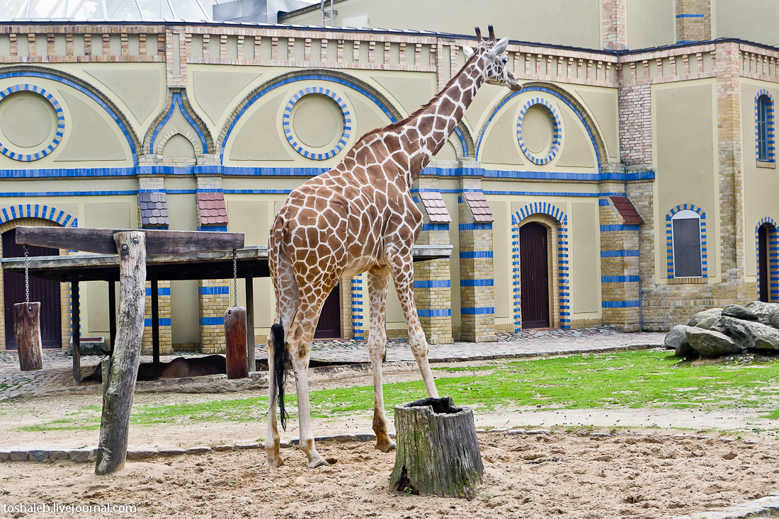 Берлин_зоопарк-34