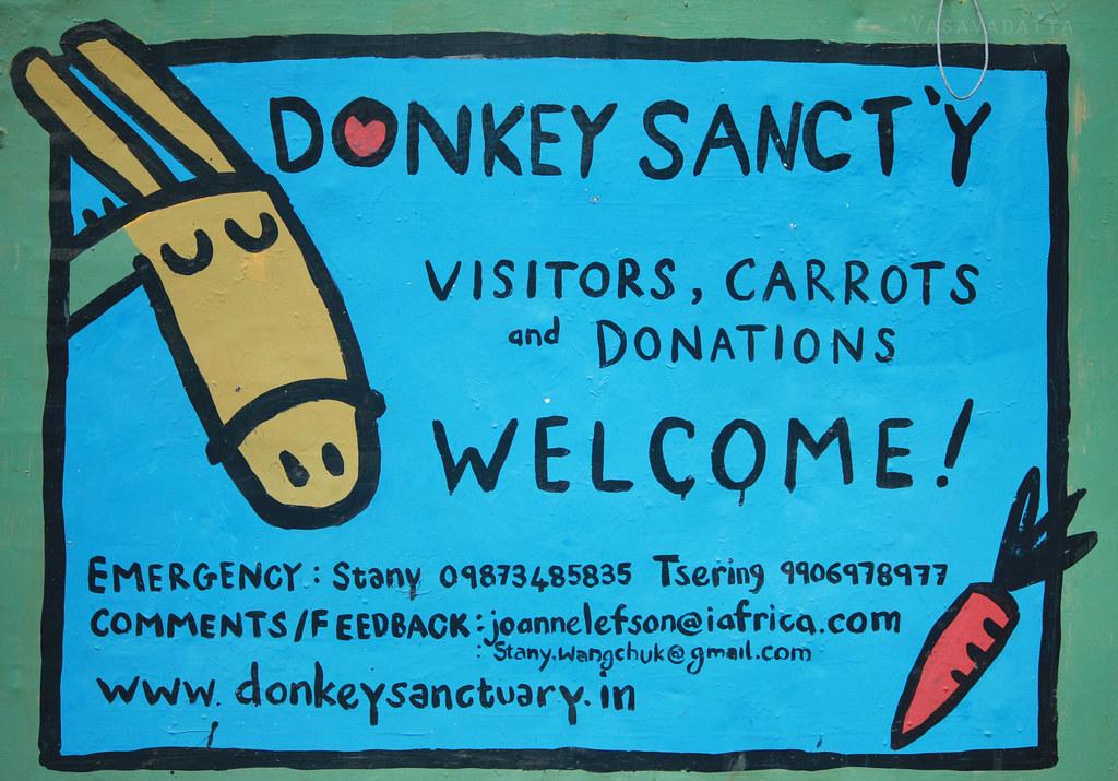 At the Donkey Sanctuary