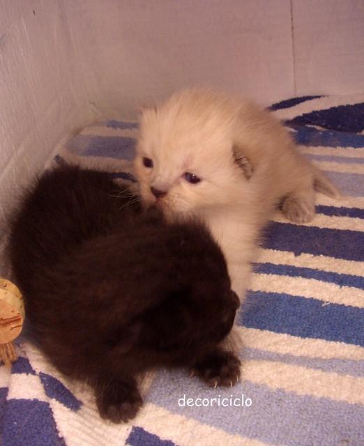 gattini seconda settimana 7