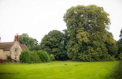 Lime Tree at Tortworth Church