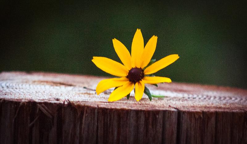 flowerseven
