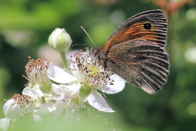 Brown definition meaning - Brown butterfly meaning money ...