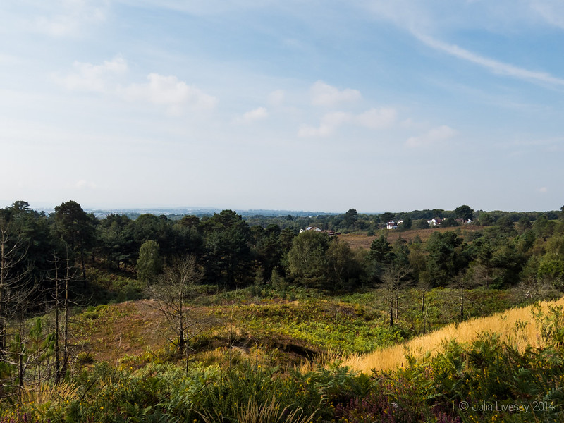 View over Canford Heath