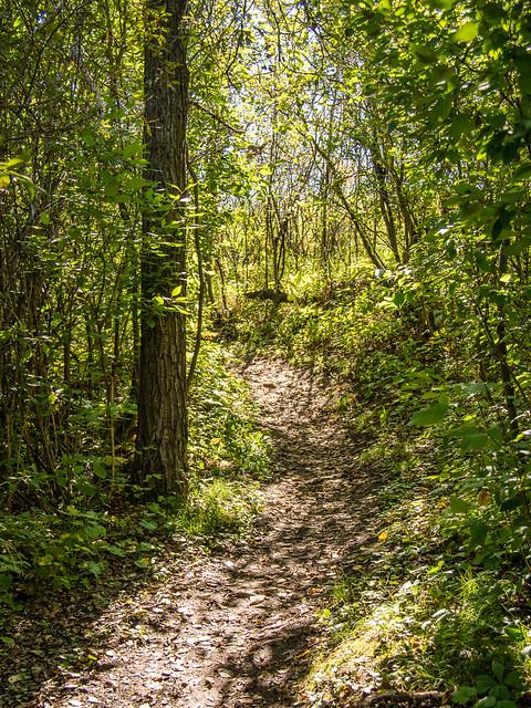 sun dappled path
