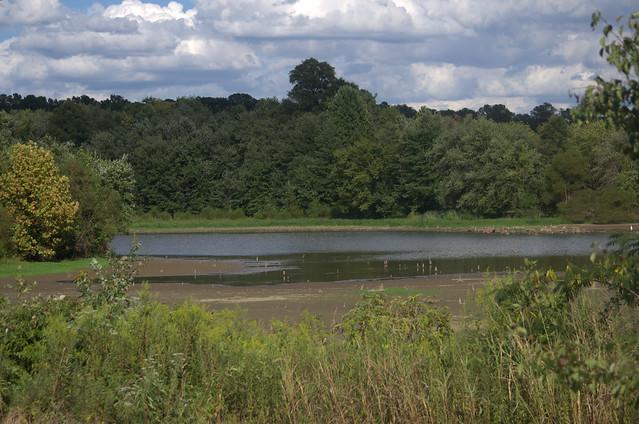 Chamberlyn Swamp