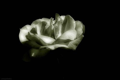 af1408_0490 fragrancia