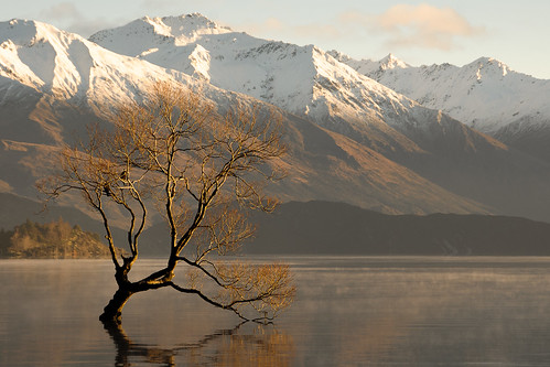 mist lake mountains tree willow nz otago wanaka