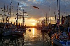 Tall ships races Bergen 2