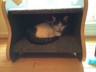 Googie Cat Bed product review
