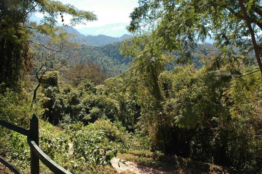 DSC_1519 Parque Nacional Calilegua, Jujuy