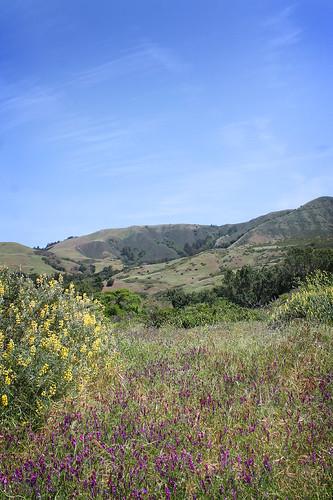 Andrew Molera State Park