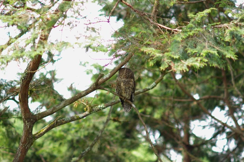北橫、太平山-生態、微距、飛羽三個願望一次滿足